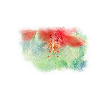 Softly Colored 1 by Judy Hall-Folde