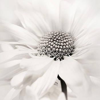 Soiree in Black n White by Darlene Kwiatkowski