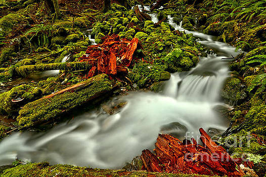 Sol Duc Rainforest Recycling by Adam Jewell