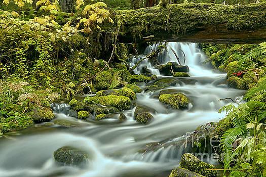 Sol Duc Rainforest Stream by Adam Jewell
