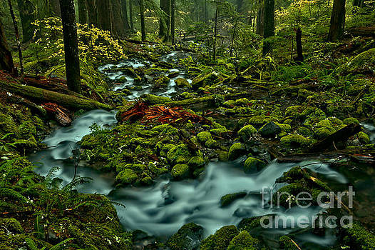Sol Duc Tranquility by Adam Jewell