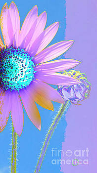 Solar Daisy by Robert ONeil