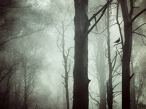 Solitude by Amy Weiss
