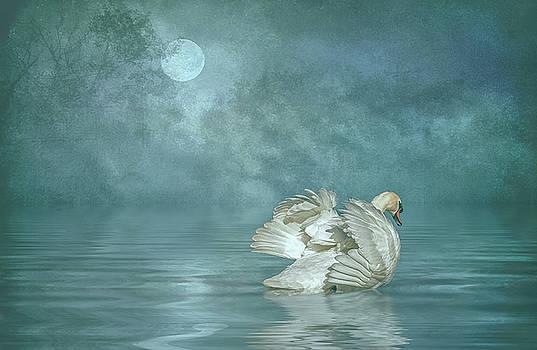 Solitude by Brian Tarr