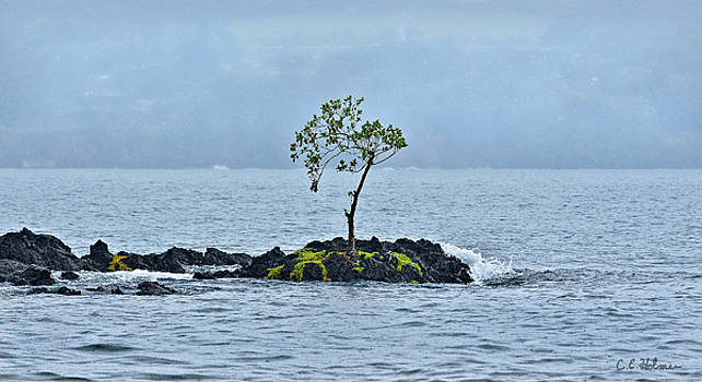 Christopher Holmes - Solitude In Hilo Bay