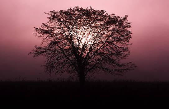 Solitude by Jonas Wingfield