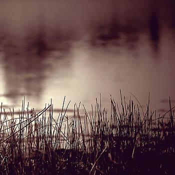 Solitude by Trish Mistric