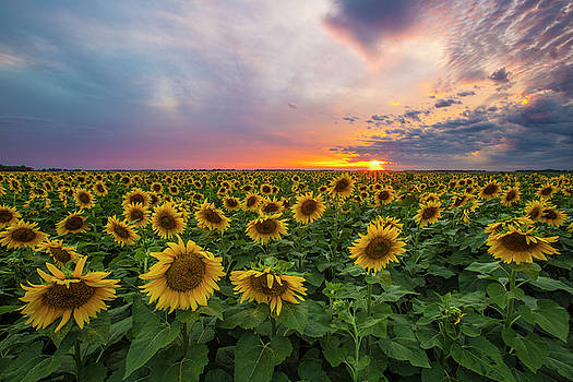 Somewhere Sunny  by Aaron J Groen