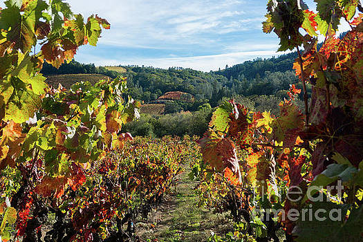 Sonoma Vineyard by Terry Lynn Johnson