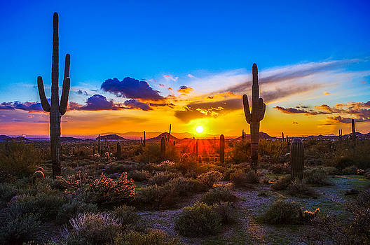 Sonoran Saguaros Sunset by Casey Stanford