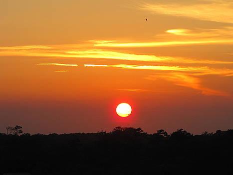 Shane Brumfield - South Carolina Sunset