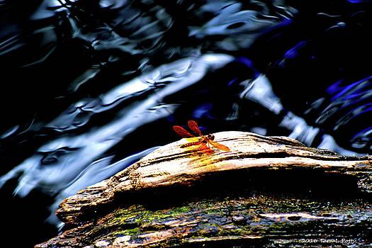 Southern Dragonfly by Tara Potts