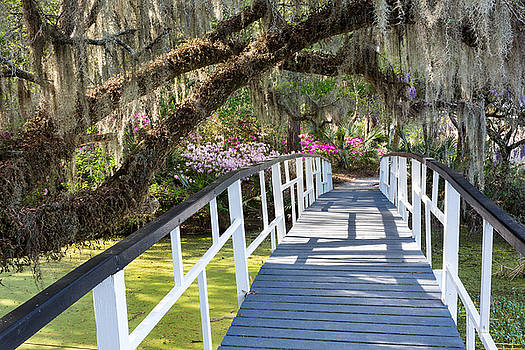Southern Romantic Garden Magnolia Plantation Charleston South Ca by Mark VanDyke