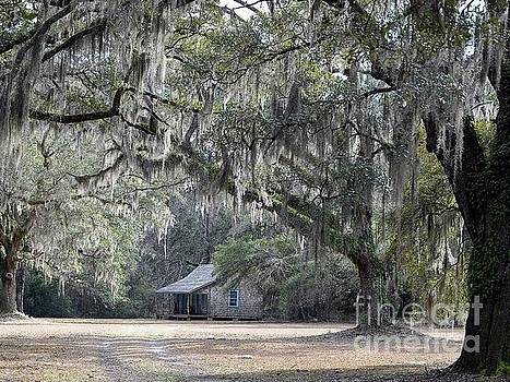 Southern Shade by Al Powell Photography USA