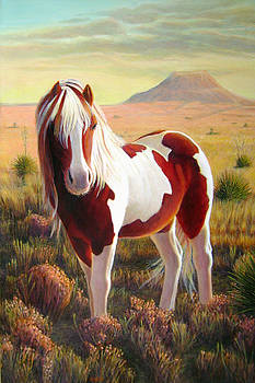Southwest Wild Pinto Pony by Charles Wallis