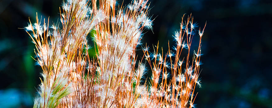 Sparklers in the Wetlands by Ed Gleichman