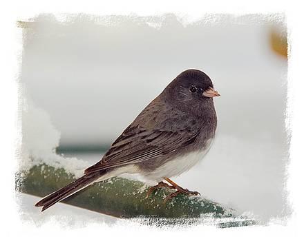 Sparrow by Abbie Loyd Kern