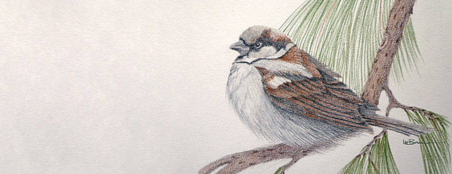 Sparrow Among the Pines by Leslie M Browning