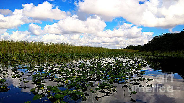 Cheryl Young - Spatterdock in the Everglades