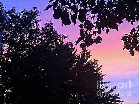 Special Sunset by Barbara Plattenburg