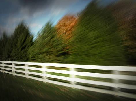 Speed by Cynthia Lassiter