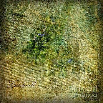 Speedwell by Liz Alderdice