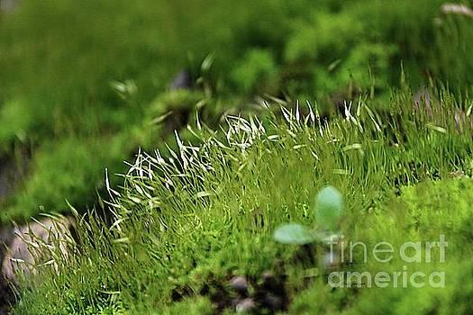Sphagnum moss by Yumi Johnson