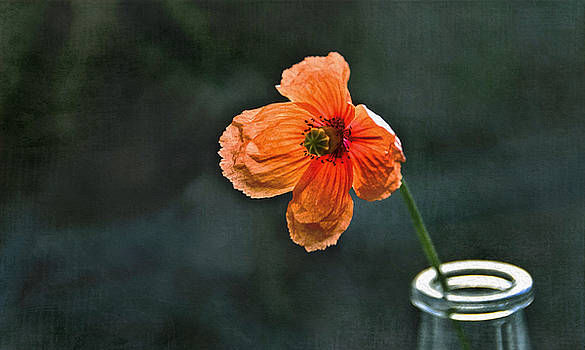 Spicy Red Poppy by Marion McCristall