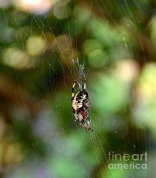 Spider Web by Janice Spivey