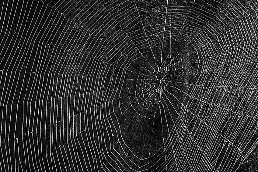 Spider Web by Jim Nelson