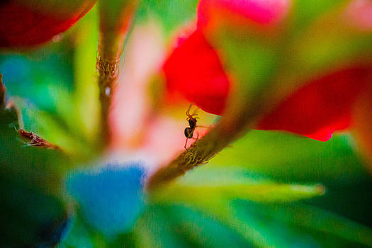Spider World by Danielle Silveira