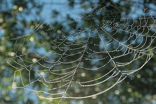 Spider's pearls by Ruthann Carlson