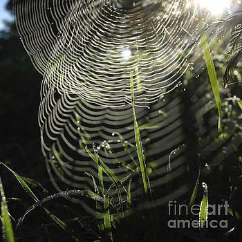 BERNARD JAUBERT - Spider