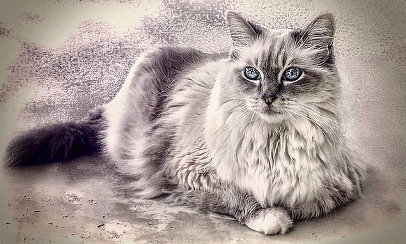 Spirit Cat 3 - sharp version by Darlene Kwiatkowski