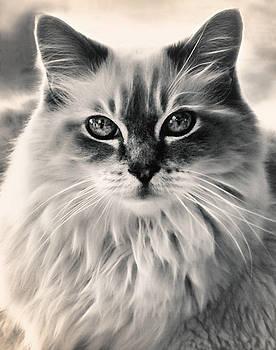 Spirit Cat by Darlene Kwiatkowski