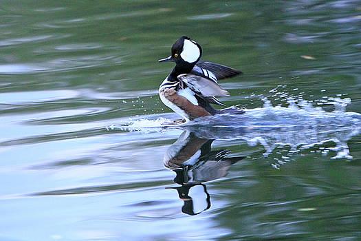 Splash Down by Shoal Hollingsworth