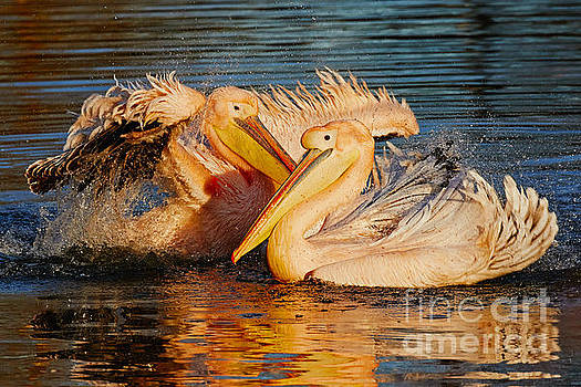 Splashing fun for two by Nick Biemans
