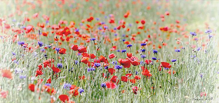 Splendor in the Poppy Field by Bonnie Willis