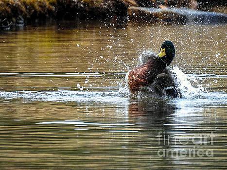 Splish Splash by Brenda Bostic