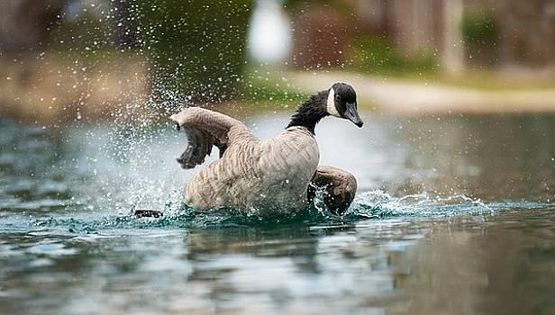 Splish Splash by Janet Moss