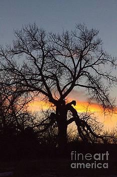 Spook Tree by Carole Martinez