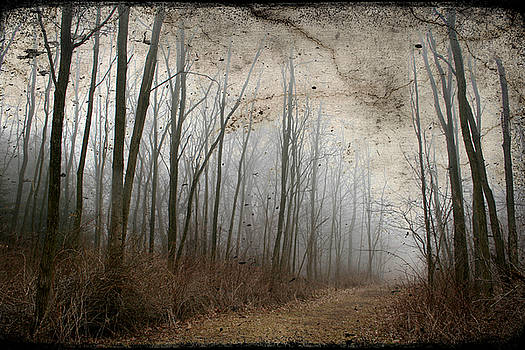 Spooky Forest Path by Kathy Stanczak