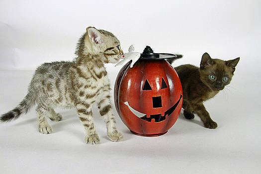 Spooky Kitties by Shoal Hollingsworth