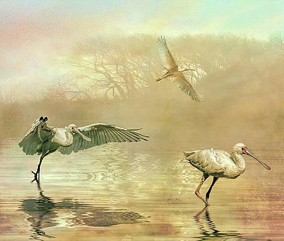 Spoonbill morning by Brian Tarr