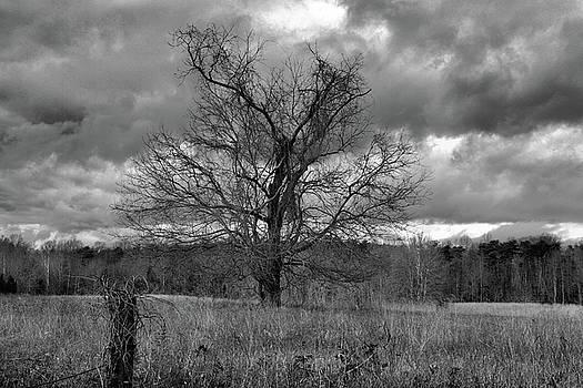 Spotsylvania Virginia Battlefield by Troy  Skebo