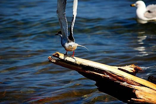 Spread and Tern by Amanda Struz
