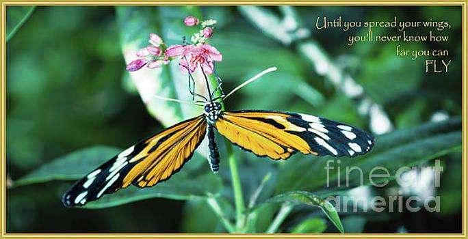 Spread your Wings by Deborah Klubertanz