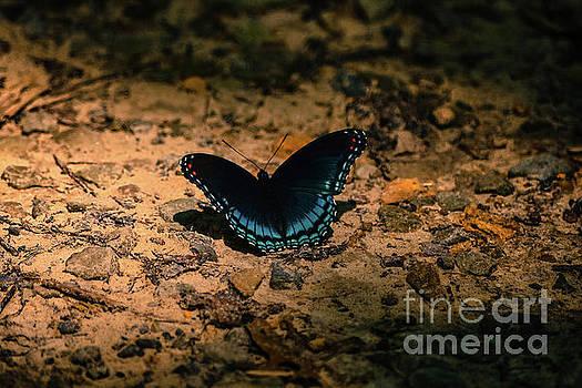 Spreadin My Wings by Brenda Bostic