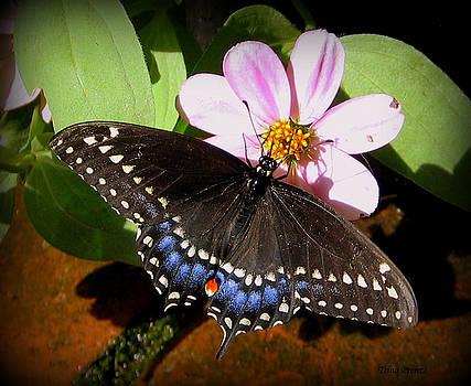 Spreading My Wings by Trina Prenzi