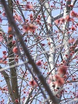 Spring 1 by Samantha  Gilbert